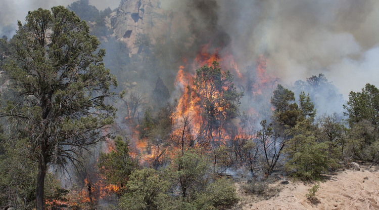 Wildfires in the Southwest have increased due to warmer temperatures, drought and insect outbreaks, all associated with climate change. Models project even more wildfire in the future, increasing risks to local communities. Pictured here is the Poco Wildfire burning near Young, Arizona, in June 2012. (Photo: U.S. Department of Agriculture)