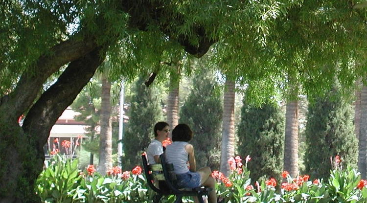 The UA Campus Arboretum provides scenery, shade and economic benefits to the University.