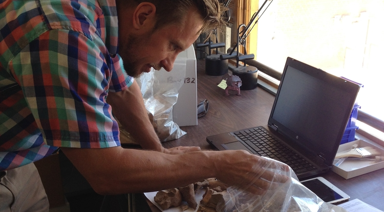 Alex Ruff sorts livestock teeth in the UA's zooarchaeology lab.