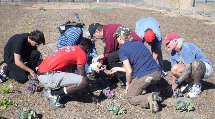 Haley Paul, with UA Cooperative Extension, works with homeless clients to harvest vegetables from an urban garden on Maricopa County's Human Services Campus.