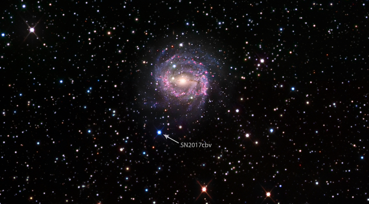 """Bright blue dot: Supernovae such as SN 2017cbv appear as """"stars that weren't there before,"""" which is why multiple images taken over time are necessary to reveal their true identity. SN 2017cbv lies in the outskirts of a spiral galaxy called NGC 5643 that lies about 55 million light-years away and has about the same diameter as the Milky Way (~100,000 light-years). Data are from the Las Cumbres Observatory Global Supernova Project and the Carnegie-Irvine Galaxy Survey. (Credit: B.J. Fulton/Caltech)"""