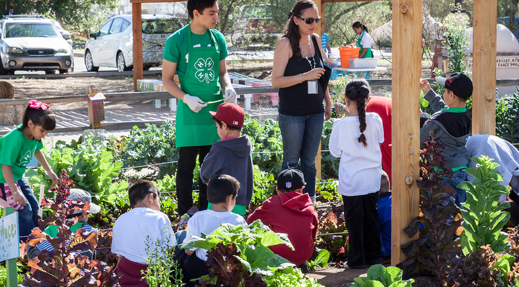 Children participate in 4-H activities at the Tucson Village Farm of 4-H. Photo credit: Judy A. Davis Photography
