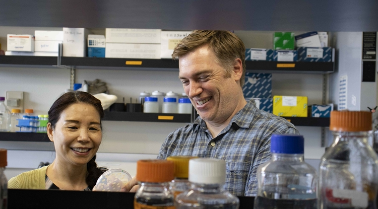 From left: Senior Research Scientist Xiangxia Luo and Andrew Capaldi, associate professor of molecular and cellular biology, examine cell lines they built that allow them to turn the TOR and PKA pathways on and off using drugs. (Photo: Michele Vaughan)