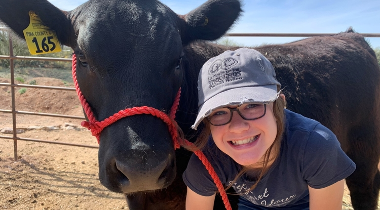 Cayla Vimmerstedt, a 4-H participant, has been raising her steer, Stitch, for eight months. Even though the Pima County Fair will not run this month as planned due to COVID-19, Vimmerstedt will still get to show Stitch in a virtual setting.