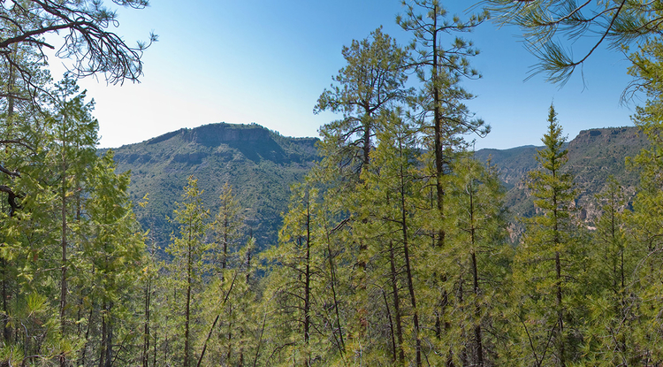 In the semi-arid forests of the western U.S., increases in rainfall extremes – wetter wet years and drier dry years – can lead to long-term declines in tree growth, even with no change in average precipitation. (Deborah Lee Soltesz/CC 1.0 Universal)