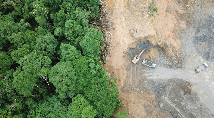 Deforestation puts very rare plant species at risk.