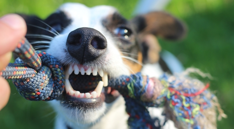 Hormone Could Be Making Your Dog Aggressive | UANews