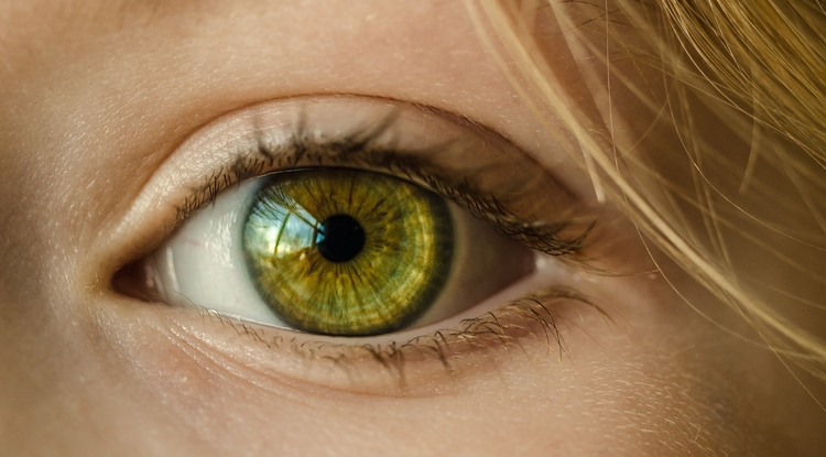 The behavior of the pupil is helping researchers understand what goes on in the brain when humans make mistakes.
