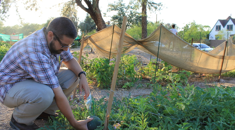 Keith Martin, an undergraduate in the UA College of Education, tends to plants in one of the UA's two community gardens. (Photo by Megan Kimble)