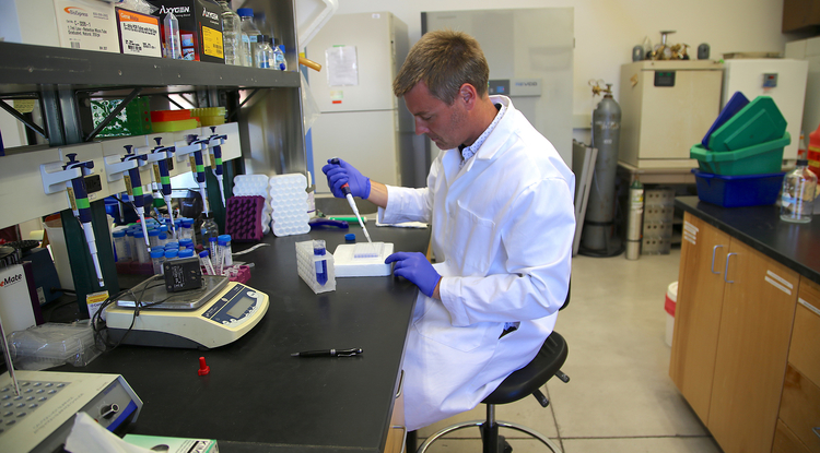Benjamin Renquist, inventor of a new animal growth assay, in his lab at the UA Agricultural Center.  (Photo: Paul Tumarkin/Tech Launch Arizona)