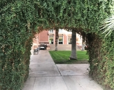 """""""Bordered by vined archways, the courtyard of the historic Forbes building is my favorite patch of grass on campus. I spent a lot of time in Forbes during grad school, and walking through that courtyard always takes me back in time."""" – Shannon Heuberger, special assistant, Office of Research, Discovery & Innovation"""