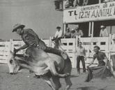 UA community members have long participated in the Tucson Rodeo.