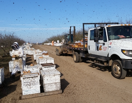 A migratory beekeeping operation feeds thousands of bee colonies throughout the vast almond orchards of California. Over a million honey bee colonies are trucked in from across the country to complete almond pollination. Almonds bloom in the middle of February, providing natural pollen and nectar for only two weeks. (Photo: Kirk Anderson)