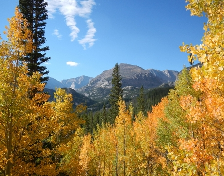 A sub-alpine forest in Colorado. Forests in the southwestern U.S. are expected to be among the hardest hit, according to the projections resulting from the study. (Photo: Sydne Record)