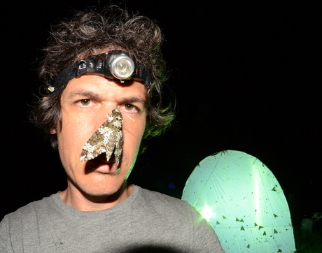 The lead author of the study, Eran Levin, gets up close and personal with a moth (Manduca rustica) during nocturnal field work in the Catalina Mountains near Tucson, Arizona. (Photo by Eran Levin)