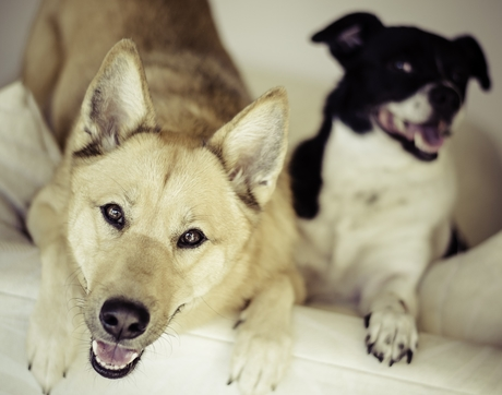 The study is based on data submitted by pet owners to the citizen science website Dognition.com.