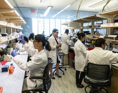 At work in the Hecker Lab. From left: Sunny Palumbo, Louise Hecker, Reena Chawla, and Gajanan Inamdar (Photo: Kris Hanning/UAHS Biocommunications)