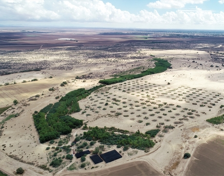 The cottonwood and willow trees planted since 2014 at the Miguel Aleman restoration site on the Colorado River Delta form the curved ribbon of dark green along abandoned back channel of the Colorado River. (Photo: Ernesto García Arvizu, Universidad Autónoma de Baja California)