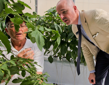 Gene Giacomelli, left, former director of the UA's Controlled Environment Agriculture Center, talks tomatoes with Todd Millay, director of the Arizona Student Unions, in the greenhouse on the Student Union roof.