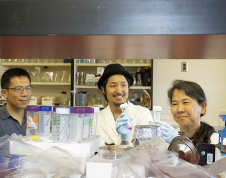 Guang Yao, Kotaro Fujimaki and Kimiko Della Croce uncovering the mechanics of cellular sleep and shutdown. (Photo: Michele Vaughan)