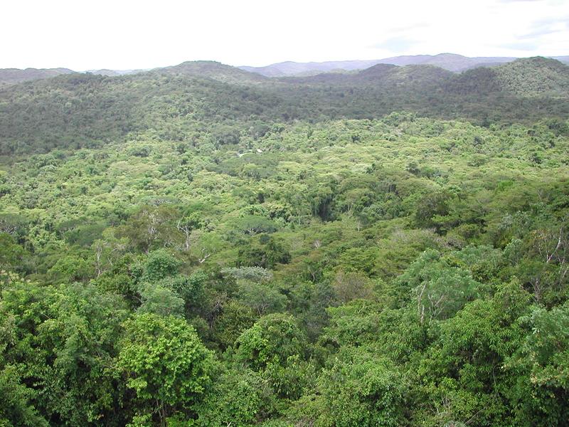 Case Studies - Forest Biodiversity - CBD