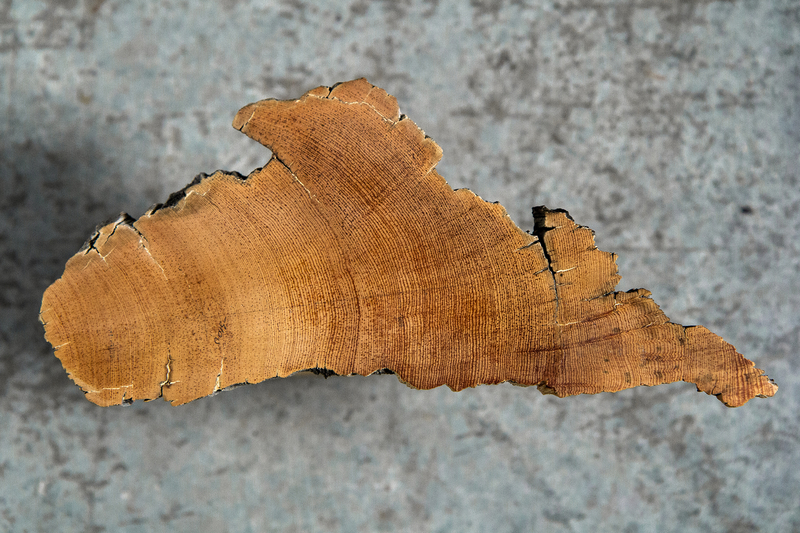 Tree ring dating accuracy of pregnancy