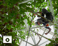 UA researcher Tyeen Taylor goes high into Biosphere 2 in his study of plant volatiles, the molecular compounds that are small enough to become a gas. (Photo: Bob Demers/UANews)