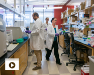 Researchers in the lab of Dr. Janko Nikolich-Zugich at the UA (Photo: Robin Tricoles/UA News)