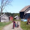 Asthma rates are much lower among children growing up in Amish farming communities compared to the average of industrialized societies. (Photo: Ian Lamont/Wikimedia Commons)