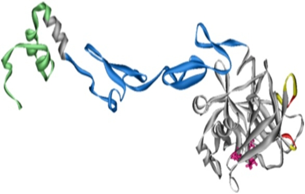 Ribbon structure of the drug 3K3A-APC, which researchers hope will help reduce brain damage in stroke victims.