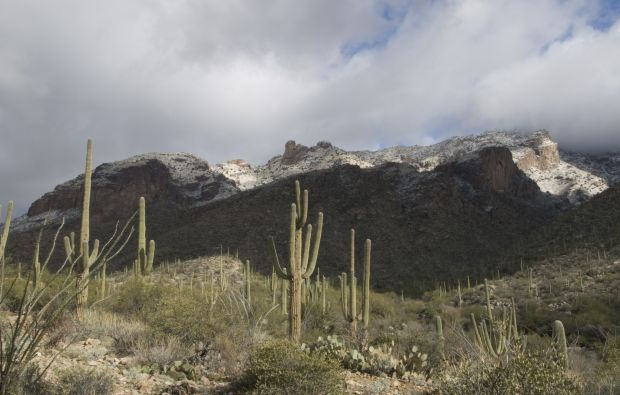 Urban and natural habitats overlap in the Tucson foothills. (Photo: D. Stolte/UANews)