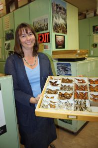 Wendy Moore, curator of the UA's insect collections, with butterfly specimens