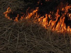 Wildfires have become more pervasive and intense. To consider policy implications, the UA is co-hosting a symposium with lawyers, economists and others to consider ways to improve the prevention and suppression of erratic wildfires.