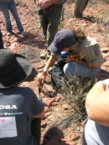 Betsy Arnold kneels to examine lichens on rocks in the field. (Photo courtesy of Betsy Arnold)