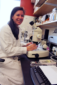 Danielle Buck's study is the first to show that mutations to the titin gene cause skeletal muscle myopathies, and could pave the way to finding a cure for muscular disease. (Photo by Beatriz Verdugo/UANews)