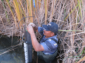 Bernabe Rico Hurtado downloads data from instruments placed in the Cienega de Santa Clara to record water quality and level. (Photo credit: Karl W. Flessa)