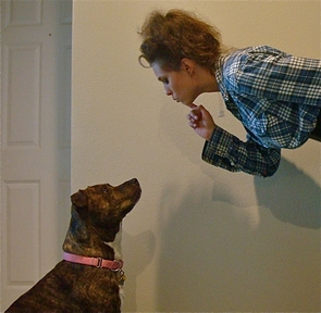 """UA alumna Gemma Zanowski and Farrah, a dog she fostered, work on the """"watch me"""" command. Volunteers through the Tough Love Pit Bull Rescue train the dogs before they are placed in a permanent home. (Photo courtesy of Gemma Zanowski)"""