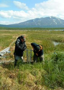 Members of the research team take soil samples from thawed permafrost to analyze for microbial communities. (Photo: Gene Tyson)