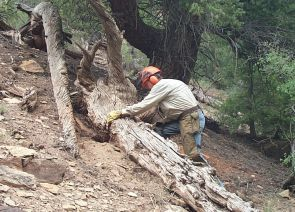 (Click to enlarge) Through the study of tree rings, researchers also identified a 60-year drought in the 1100s.