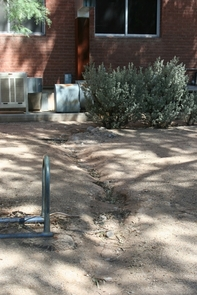 Desert landscaping adjacent to water harvesting project