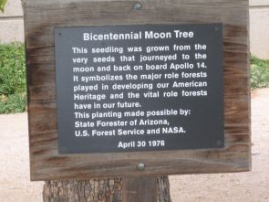 (Click to enlarge) The sign describing the Campus Arboretum's Bicentennial Moon Tree.