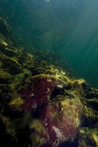 Algae and bacteria have overgrown the coral reef. As miniature version of the Gulf of California, the revived ocean habitat will feature rocky reefs rather than coral reefs. (Photo: Tobias Reitmayr)