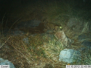 When a trail camera detects the movement of a passing animal, it snaps a picture. Images are stored and later retrieved by wildlife biologists. (Photo: USFWS/UA/DHS)
