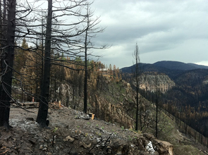 This picture shows the aftermath of the Las Conchas fire, which burned in the Jemez Mountains of New Mexico in June and July. The dead trees in the foreground are ponderosa pine that were killed by the fire. The house on the cliff in the middle of the picture survived the fire by chance. Thefoundation of another home that burned can be seen in the foreground in the lower left, just behind some blackened trees. (Photo credit: Thomas W.Swetnam/UA Laboratory of Tree-Ring Research)