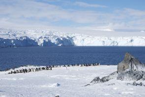 In Antarctica, Cordover calls penguins his neighbors.