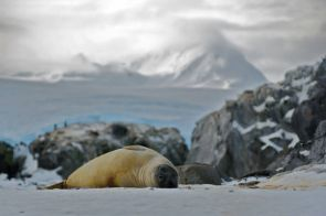 Cordover also regularly sees seals. Rules exist, he says, about not interacting with the wildlife.
