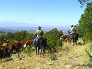 Arizona's publicly owned rangelands cover more than 8 million acres, and the livestock division of agriculture, alone, boosted the state's economy by more than $3 billion last year. (Photo courtesy of UA Cooperative Extension)