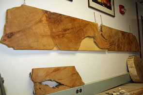 The 7-foot radius of Prometheus, the oldest individual organism ever known, adorns the wall of the UA Laboratory of Tree-Ring Research. (Image: Beatriz Verdugo/UANews)