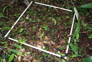For this study, the scientists sprayed experimental plots of rainforest floor with insecticide and fungicide to study the effects of pests on the plant community's diversity. (Photo: Owen Lewis)