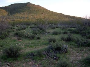 (Click to enlarge) Researchers from Larry Venable's lab at the University of Arizona have been studying how climate affects the growth of winter annuals since 1982. This picture shows part of the study site, which is at Tumamoc Hill in Tucson, home of the UA's Desert Laboratory. (Credit: Copyright 2005 Kathy Gerst)
